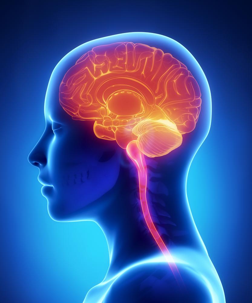 diagram of the human brain