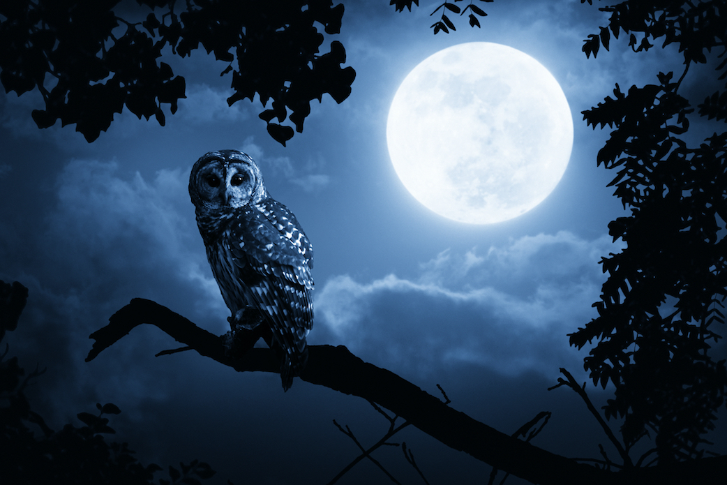 Article Image: is-it-better-to-be-a-night-owl-or-an-early-bird